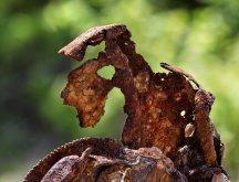 Rust Art III